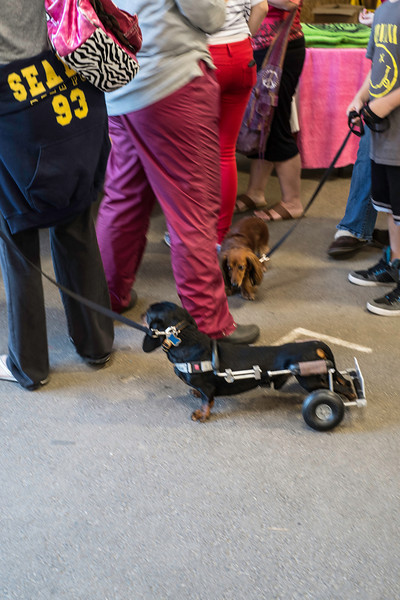092212_Cape_Cod_Doxie_Day0151