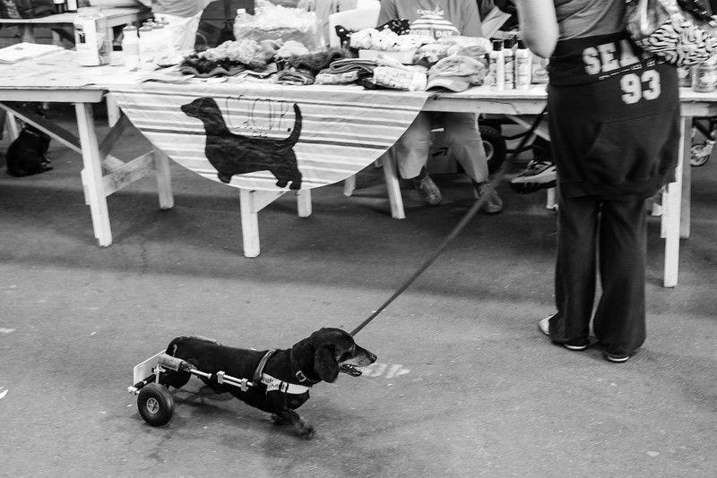 092212_Cape_Cod_Doxie_Day0155