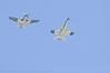 AirV2011_0324