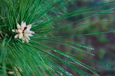 2016-03-05 Bush Park fishing 053 pine cones