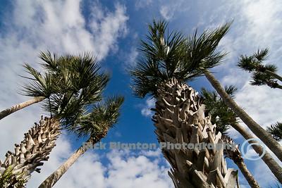 """ The Palms """