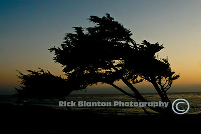 """ Windswept Tree """