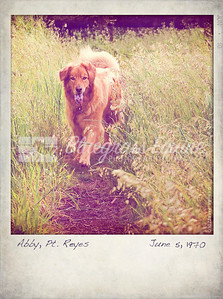 Abby shot at Point Reyes. Image was processed to look like an old polaroid  and texture added to add to effect of aging.