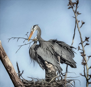 This year I hope to shoot the heron season from when they herons return to the nest until the last fledging leaves the nest.  This is the beginning!