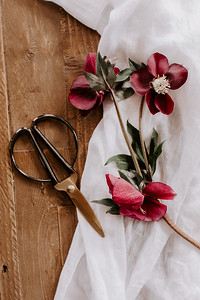A Floral Thing - Jamie Mercurio Photo-34