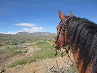 On a wild horse hunt in Owyhee, on Jose, the best horse ever