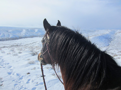 Riding Dudley in the snowiest Owyhee winter ever