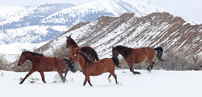 Dashing through the Owyhee snow