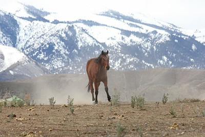 Hillbillie Willie the Standardbred in Owyhee