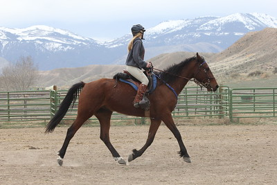 Riding lesson for Hillbillie Willie the Standardbred endurance horse
