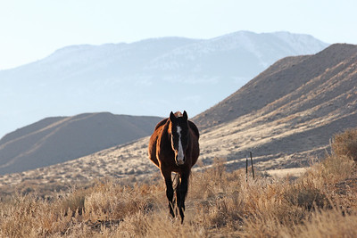 Stormy, The Most Beautiful Horse on the Planet, in Owyhee