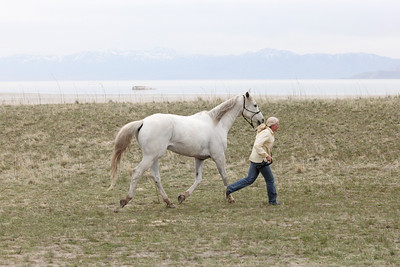 Utah's Antelope Island endurance ride - Best Condition judging