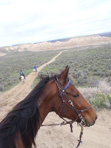 Riding Hillbillie Willie in the Owyhee Tough Sucker, Idaho