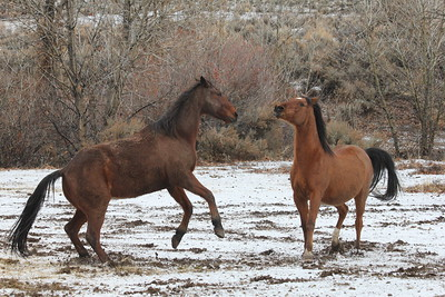 Hillbillie Willie and Jose playing in Owyhee, Idaho