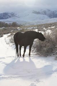 Mr Tudball and his shadow in Owyhee, Idaho