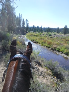 Riding Hillbillie Willie in the Old Selam endurance ride, Idaho