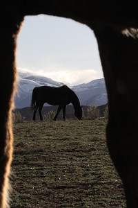 Portrait of an Owyhee horse, Idaho