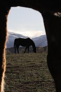 Portrait of an Owyhee horse, Idaho