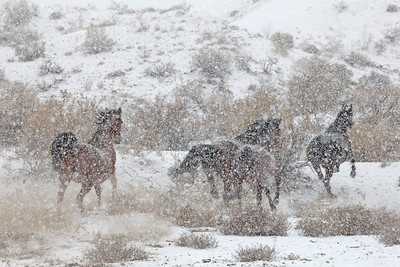 Romping in the snow in Owyhee, Idaho