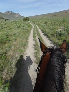 Riding Hillbillie Willie on the historic Boise-Kelton stage road in the City of Rocks endurance ride, Idaho