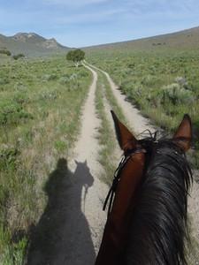 Riding Hillbillie Willie on the historic Boise-Kelton stage road in the City of Rocks endurance ride, Idaho