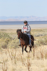 An Icelandic horse (!) in the Antelope Island endurance ride, Utah