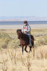 An Icelandic horse (!) in the Antelope Island endurance ride, Utah