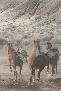 Wind makes the Owyhee herd frisky!