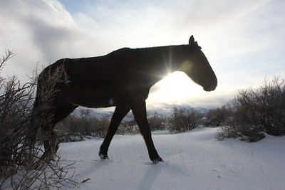 Hillbillie Willie in the Owyhee snow, Idaho