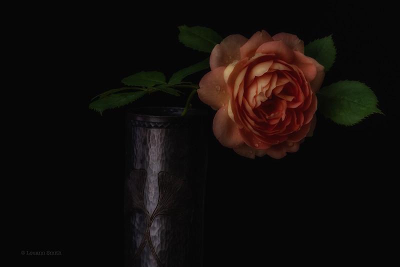 Rosa 'Lady of Shallot'