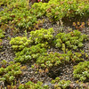 The Greenroof at Bulfinch Hall provides 1700 square feet of vegetated habitat.