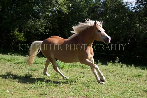 A HORSE NAMED TUCKER