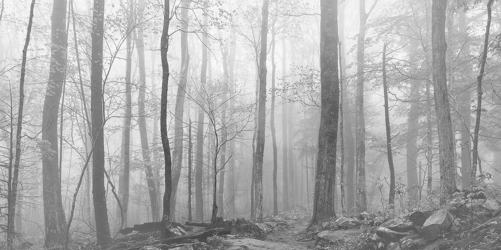 Foggy Morn in the Smokey Mountains