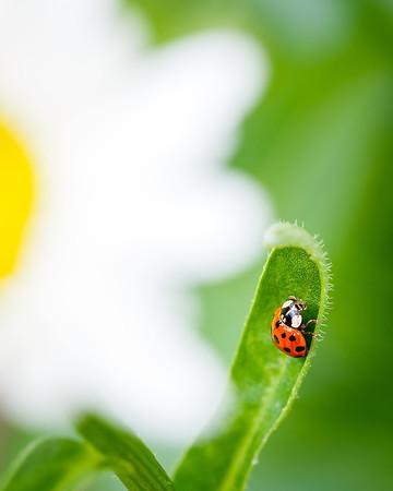 Ladybug:)