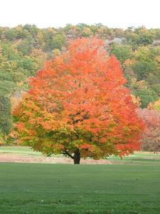 Tuxedo Park , NY