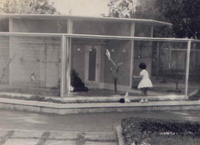 Gaiolas dos pássaros ( traseiras da K18) - Isabel Reis