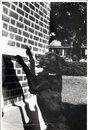 Tico-tico - Cao do Beka ( Adalberto) na casa em frente aos escritorios
