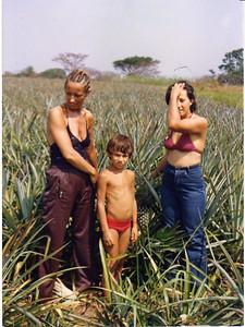 Plantação de abacaxis - Bia esposa do Ze Gato, H.Grilo e Manuela Grilo