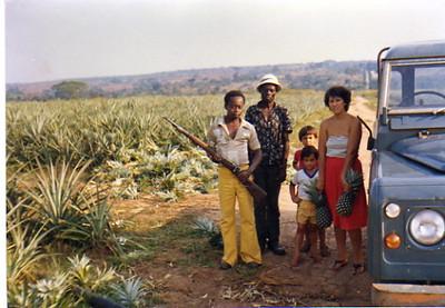 Plantação de abacaxis - Manuela Grilo, filhos e amigos
