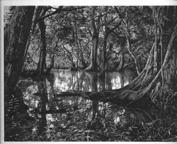 Natureza tropical perto do Dundo