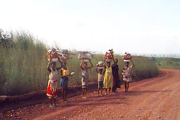 Mulheres vindas da lavra com mandioca