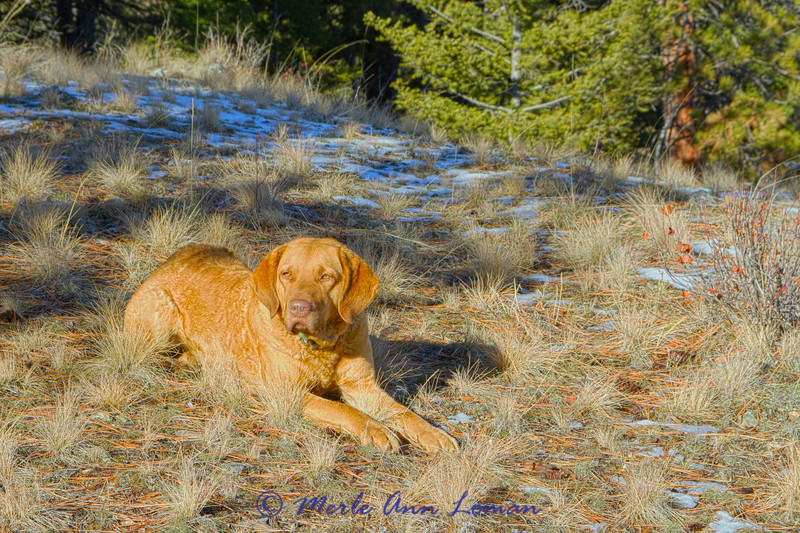 "New Years Day 2014 on a hike up Sweathouse Creek Ridge. She was waiting for Jack and me to ""catch up"" with her on the ascent."