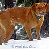 """Freda in February. """"What?"""" Loving the snow!"""