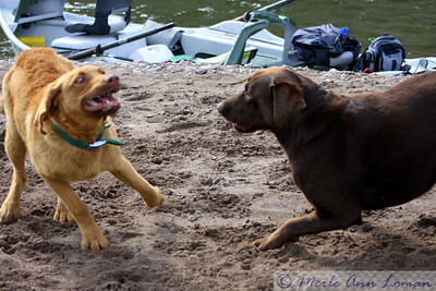 Freda and her friend, Flicka, on the Blackfoot River. Playing on the shore after a long ride in the boat.