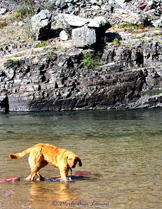 Our puppy, Freda. She is a Chesapeake Bay Retriever, 6 months old. This photo is on the Blackfoot River.