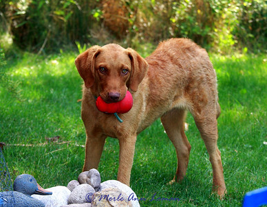 September 5 - her new red toy!