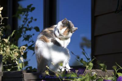 Linda's cat Wilhelmina or just plain Mina (meena)