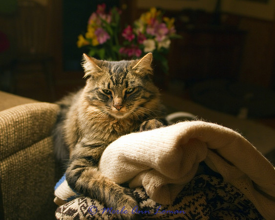 Vesper, Jessa's cat