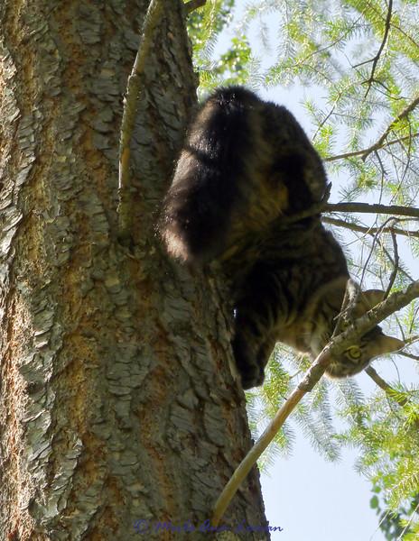 Vesper is up-a-tree