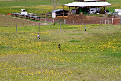 2011 May dandelions and tumbleweed, kids delight